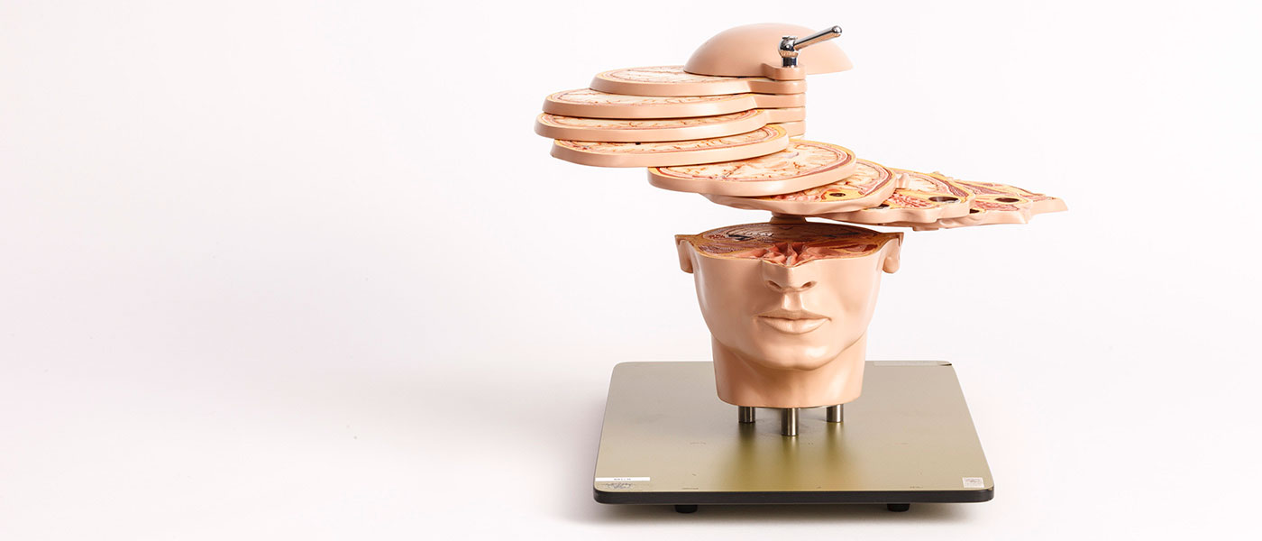 anatomy-head